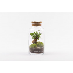 Les Terrariums - Only in store